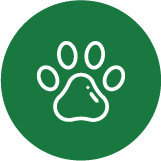 Dog walkers and handlers in London that are recommended by vets