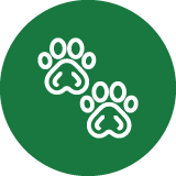 Experienced dog walkers and handlers in London